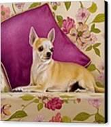 Chihuahua II Canvas Print