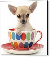 Chihuahua In Cup Dp684 Canvas Print by Greg Cuddiford