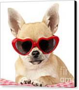 Chihuahua In Heart Sunglasses Dp813 Canvas Print by Greg Cuddiford
