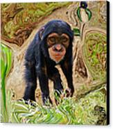Chimpanzee Canvas Print by Daniele Smith