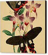 Chinese Butterflies Canvas Print by Philip Ralley
