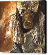 Chocolate Poodle Canvas Print by Susan A Becker