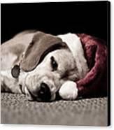 Christmas Beagle Canvas Print