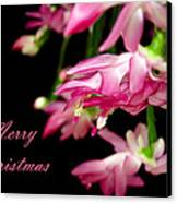 Christmas Cactus Greeting Card Canvas Print by Carolyn Marshall