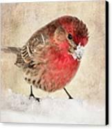 Christmas Card 9 Canvas Print