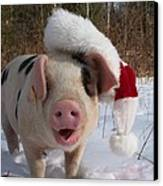 Christmas Pig Canvas Print