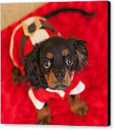 Christmas Puppy Canvas Print by Kay Pickens