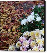 Chrysanthemums In The Forest Canvas Print by Ioana Ciurariu