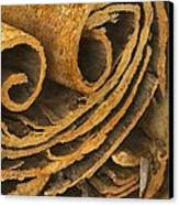 Cinnamon, Sem Canvas Print by Power And Syred