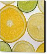 Citrus Slices Canvas Print by Kelly Redinger