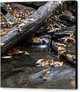 Clean Clear And Natural Canvas Print by Andrew Pacheco