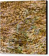 Clean Stream 2 - Featured 3 Canvas Print by Alexander Senin