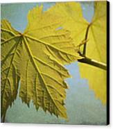 Clinging To The Vine Canvas Print by Fraida Gutovich