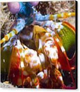 Close-up View Of A Mantis Shrimp Canvas Print by Steve Jones