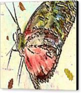 Cloud Butterfly Canvas Print by Jill Balsam