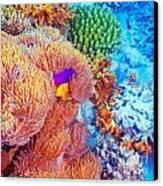 Clown Fish Swimming Near Colorful Corals Canvas Print