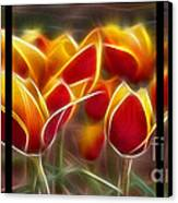 Cluisiana Tulips Triptych  Canvas Print by Peter Piatt