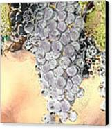 Cluster Of Grapes Canvas Print by Artist and Photographer Laura Wrede