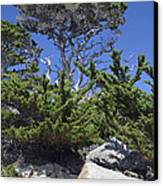 Coastal Trees In California's Point Lobos State Natural Reserve Canvas Print by Bruce Gourley