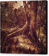Coba Tree Canvas Print by Stuart Deacon