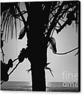 Coconut Palm - Cocotier - Ile De La Reunion - Reunion Island Canvas Print by Francoise Leandre