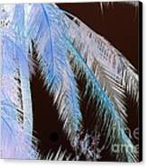 Coconut Palm - Reunion Island - Indian Ocean Canvas Print