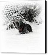 Cold Feet Canvas Print