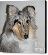Collie Canvas Print by David Grant