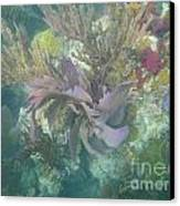 Color Corals Canvas Print by Adam Jewell