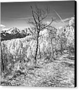 Colorado Backcountry Autumn View Bw Canvas Print by James BO  Insogna