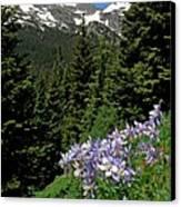 Colorado Classic Canvas Print by George Tuffy