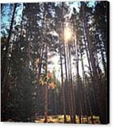 Colorado Pines Canvas Print by Garren Zanker