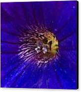 Colorful Attraction Canvas Print by Michael Sokalski