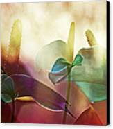 Colorful Calla Canvas Print by Eiwy Ahlund