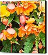 Colorful Flowers Canvas Print by Tom Gowanlock