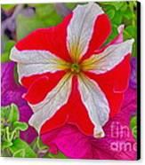 Colorful Garden Flower Canvas Print