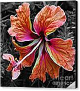 Colorful Hibiscus On Black And White 2 Canvas Print by Kaye Menner