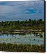 Colorful Marsh Canvas Print by Jason Brow