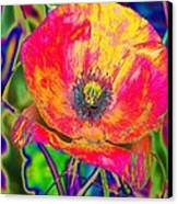 Colorful Poppy Canvas Print
