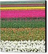 Colors Of Holland Canvas Print by Lars Ruecker