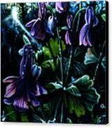 Columbine In The Woods Canvas Print