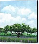 Comfort14-2 Canvas Print by William Killen