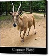 Common Eland Canvas Print by Chris Flees