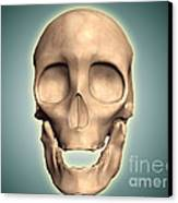 Conceptual Image Of Human Skull, Front Canvas Print by Stocktrek Images
