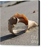 Conch On The Beach Canvas Print