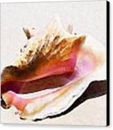 Conch Shell By Sharon Cummings Canvas Print by William Patrick