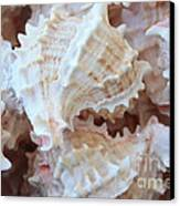 Conches Canvas Print