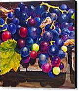 Concord Grapes On A Step Canvas Print by Sarah Luginbill