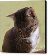 Contemplating A Pounce Canvas Print by Diana Besser