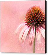 Cool And Pink Canvas Print